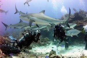 Shark diving near Roatan. Honduras Tour Package
