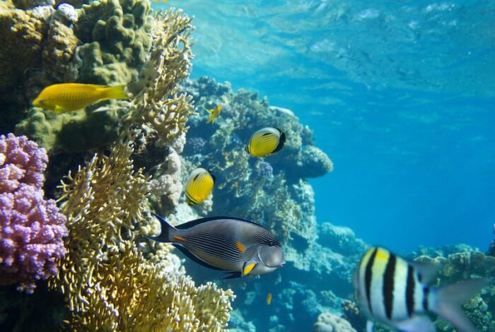 The amazing barrier reef in the bay islands. Snorkeling and diving trips in Honduras
