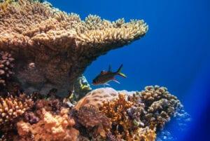 Beautiful coral reef in Honduras.