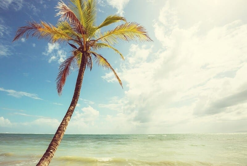 Palm in the beautiful Pacific Coast of Costa Rica.